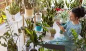 Стайни растения за всяка зодия