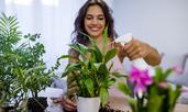 5 невероятни ползи от домашните растения