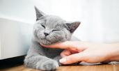 Причините котките да мъркат ще ви изненадат