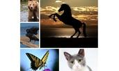 Тест: В какво животно искате да се превърнете?