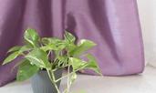 Сциндапсус – красива падаща зеленина