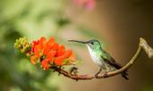 Невероятно любопитни факти за колибрито