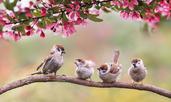 4 зодии, за които май ще е прекрасен