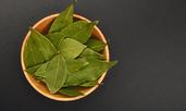 Ползите за здравето от маслото от дафинов лист