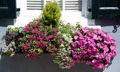 Цветята, които премахват умората и депресията