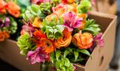 Символно значение на едни от най-красивите цветя