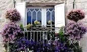 Растения, подходящи за балкон