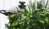 Най-добрите билки при задържане на излишни течности