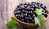 Ползи за здравето от сушения черен касис