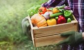Растителни храни, които е добре да ядете по-често