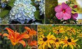 5 лесни за отглеждане цветя, с които да украсите градината