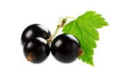 5 здравословни ползи на маслото от черен касис