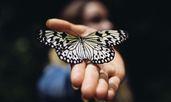 Какво означава, ако често виждате пеперуди