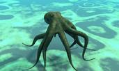 Знаете ли, че... октоподите нямат 8 крака?