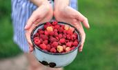 13 ползи за здравето от малините
