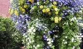Кое цвете можем да насадим навсякъде – идеалната декорация?