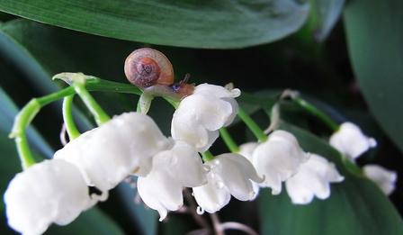 Какви цветя са подходящи за подарък за отделните зодии